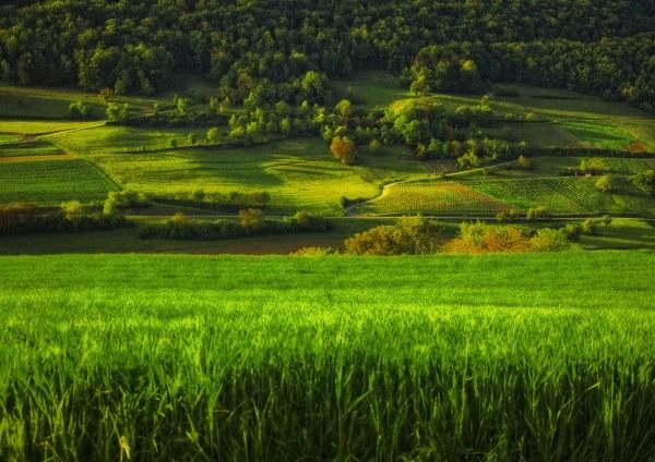 green landscape svetlana peric
