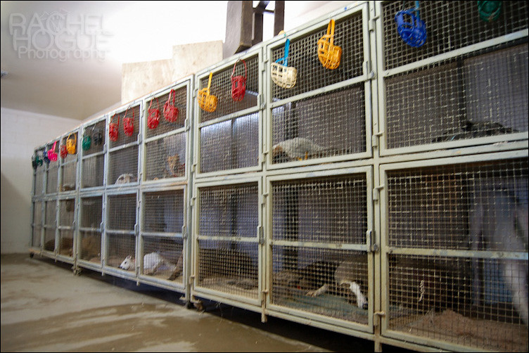 Crates  This is the inside of a kennel building The