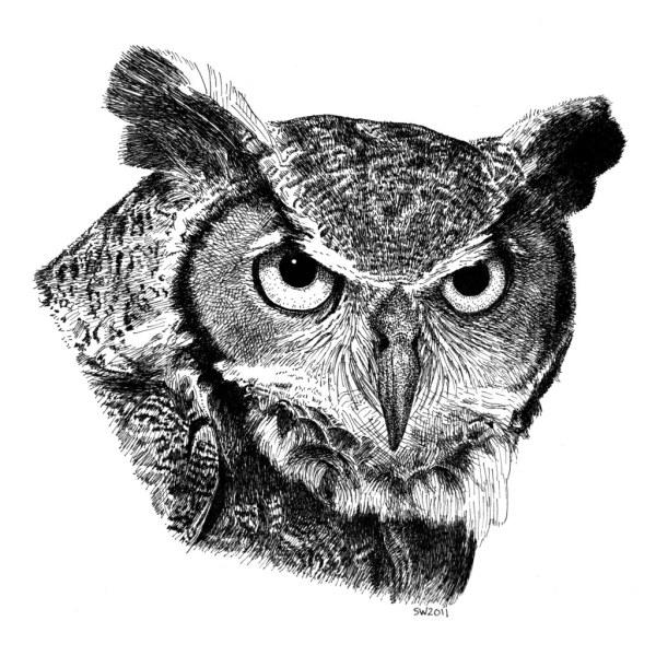 Great Horned Owl Based Naturewalk. Wasn