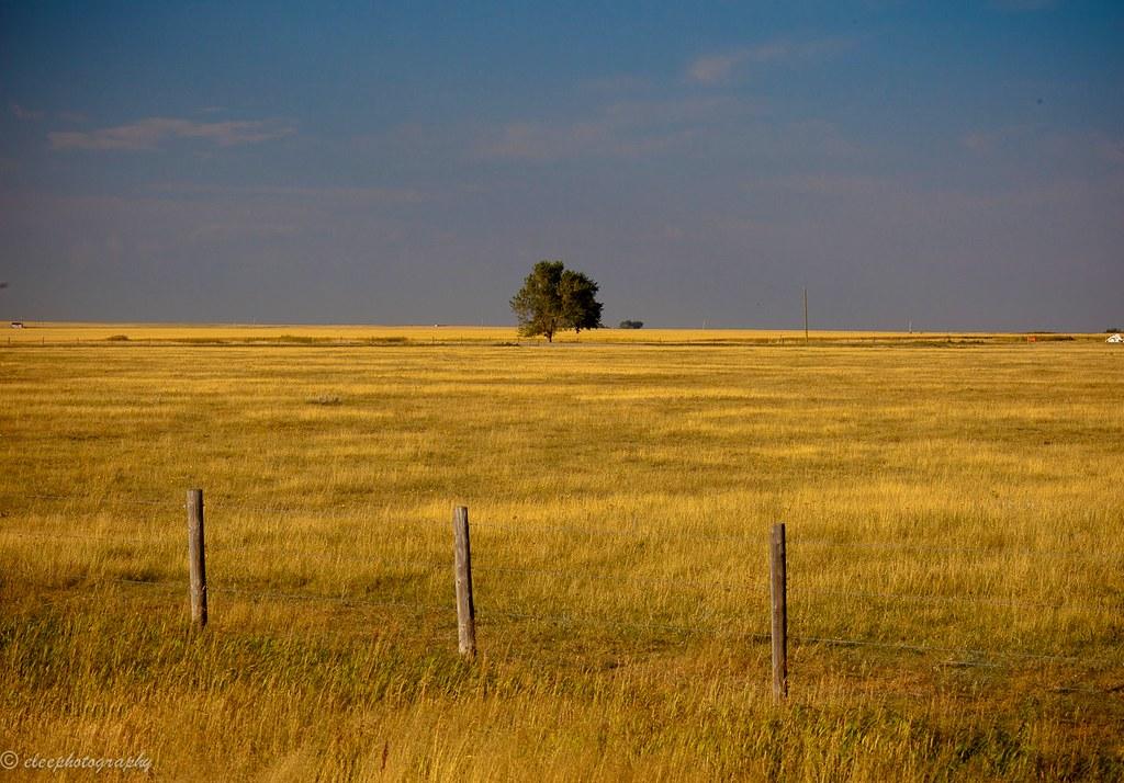 Rural Alberta Canada  Flat prairie farmlands exist for