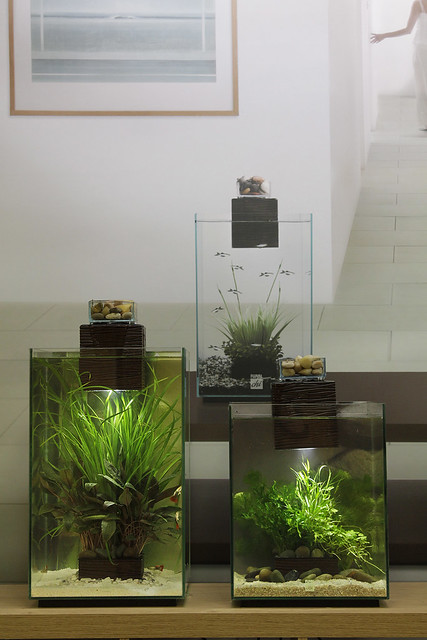 Fluval Chi (19 And 25 Litre)  Flickr  Photo Sharing
