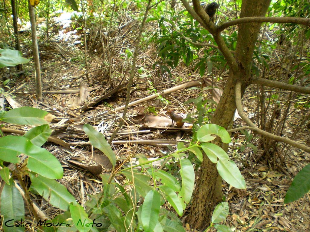 Animais escondidos Hidden animals  Parque do Sabi  Uber  Flickr