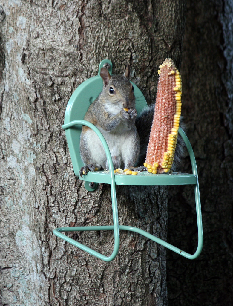 squirrel chair feeder troutman outlet and there you have it! sitting in a chair! =o) | flickr