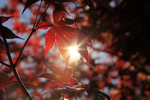 Fall Leaves And Pumpkins Wallpaper Hello Autumn April Flickr