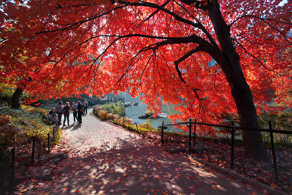 Central Park In Fall Wallpaper Cherry Umbrella United States New York New York City