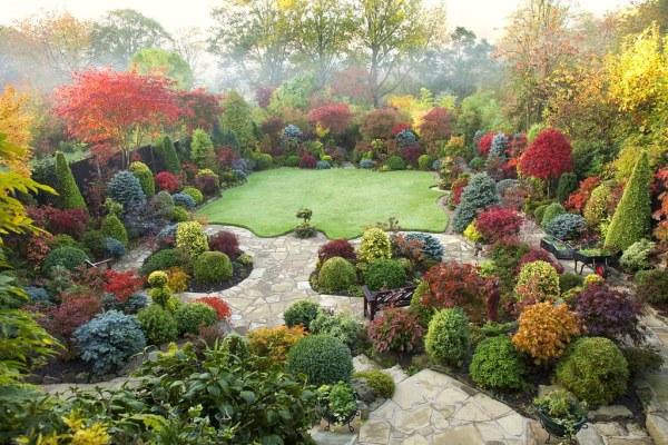 autumn japanese maple colours