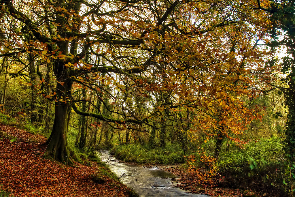 Fall Landscape Wallpaper Autumn In Ireland Autumn In Curragh Woods Near Midleton