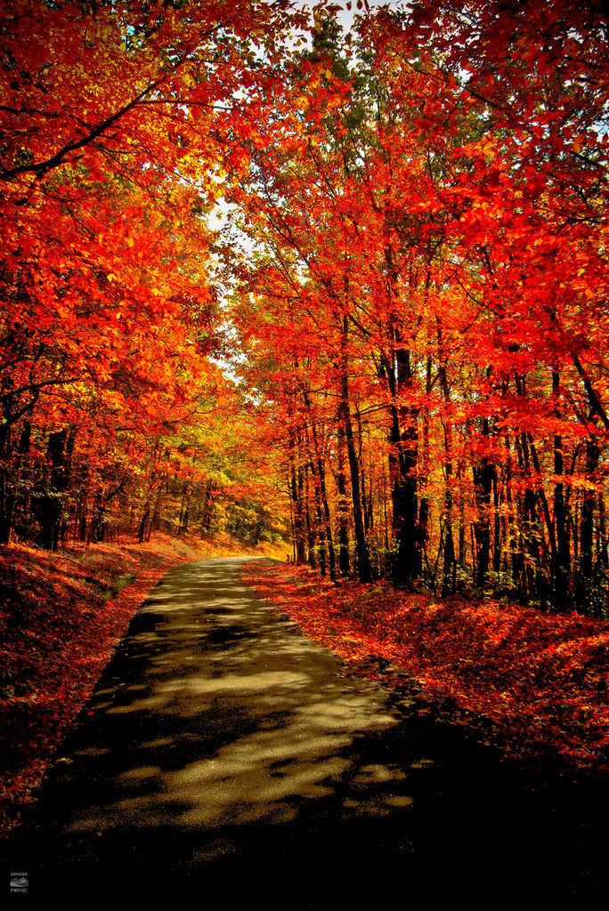 Tree With Leaves Falling Wallpaper Autumn In Virginia My Last Day Of Vacation So I Went
