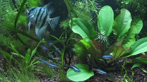 20 Gallon Long Planted Aquarium
