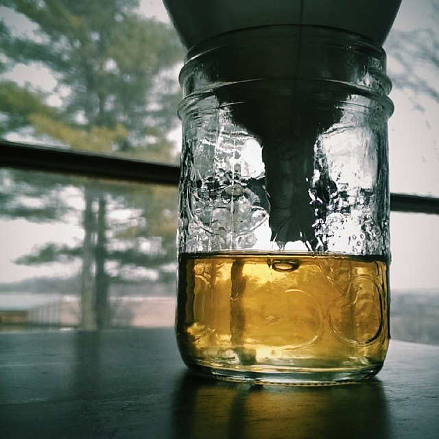 One final filter on this morning's syrup. Beautiful Fancy-grade syrup.