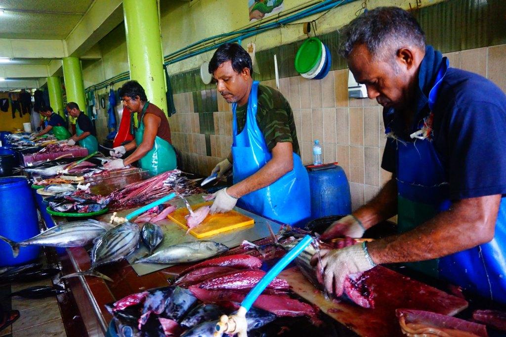 馬爾地夫到底要選居民島魚市場