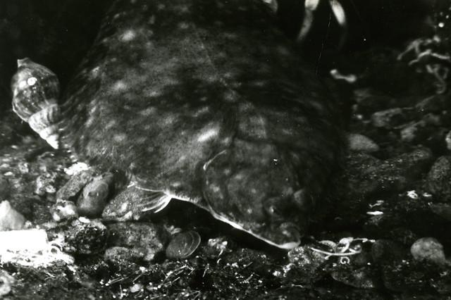Мыс Картеш аквариум камбала