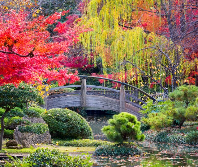 Moon Bridge In The Japanese Gardens By Dfikar