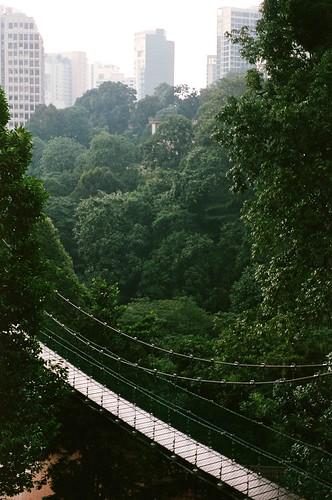 Bukit Nanas Canopy Walk