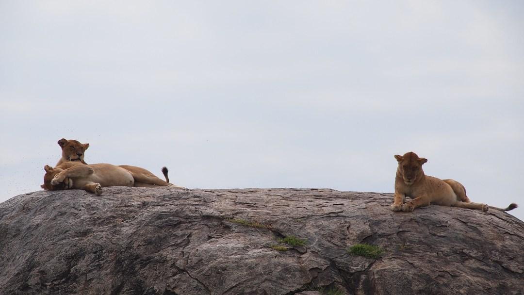 Tansanian Safari 2016