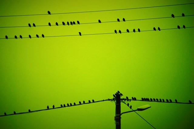 Portée ornithologique