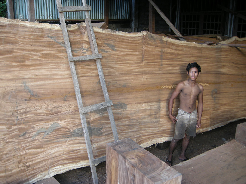 Acacia wood slabs  Monkey pod furniture suar wood