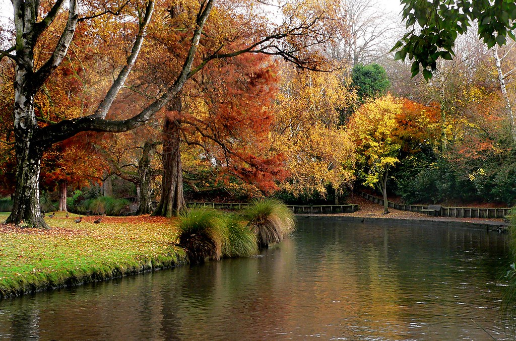 Fall Leaves Wallpaper Hagley Park New Zealand The Christchurch Botanic