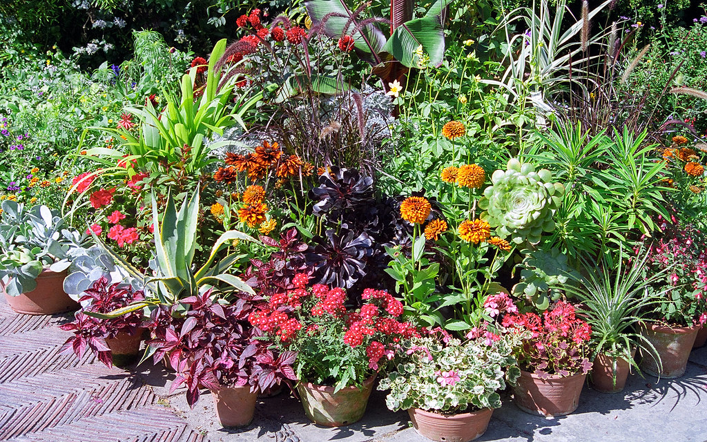 Container gardening at Great Dixter Gardens Sussex Engla