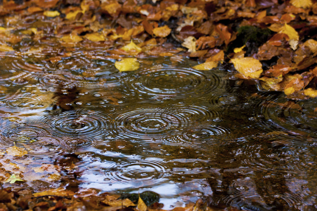 Fall Wallpapes Fall Rain Jakob Nilsson Ehle Flickr