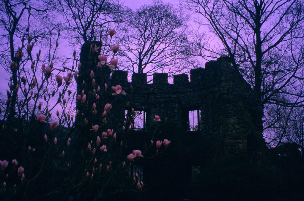 England Dunster Castle creature  Unintentional