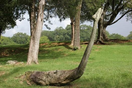 Tim Tingle's Carvings at Orr Park in Montevallo AL