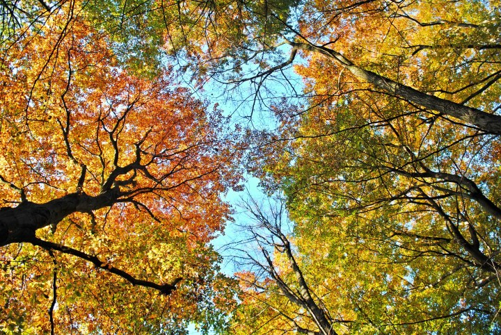 Best thing about autumn: the colours!