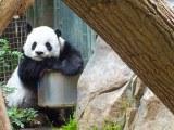 Bored Panda Taken In San Diego Zoo Moonpig77 Flickr
