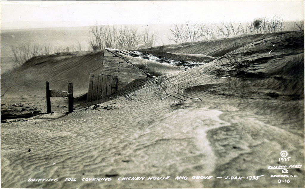 Drifting soil covering chicken house and grove, South Dakota, 1935. Rosebud Photo Co., Gregory, S.D.