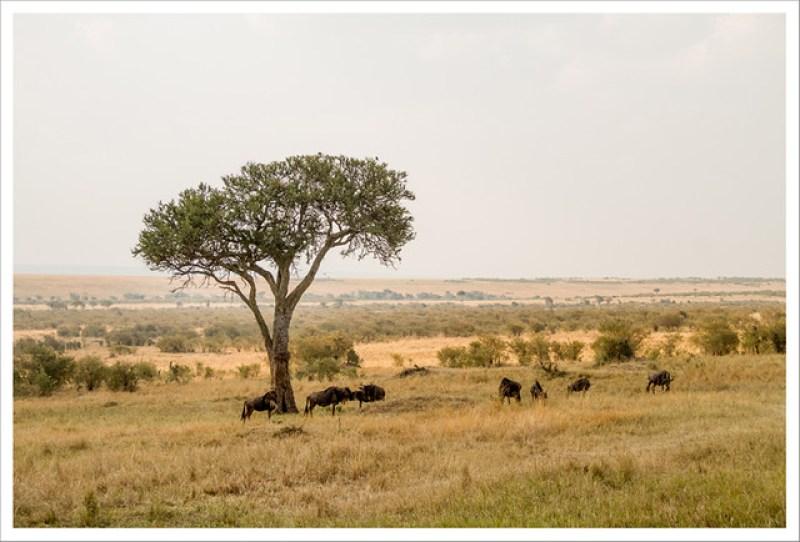 MasaiMara-42
