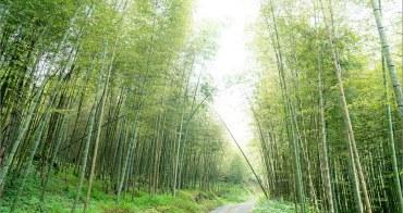 竹山旅遊 ︱孟宗竹隧道.綿延2公里、遠離人潮的竹之森林
