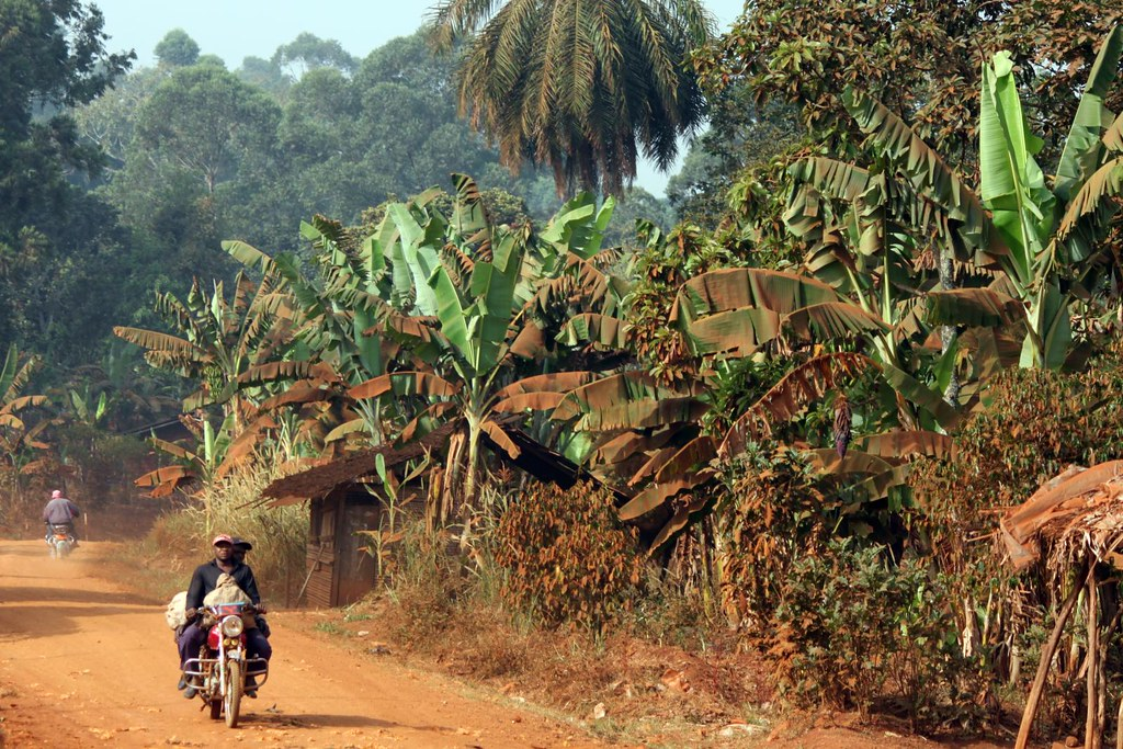 Cameroon landscape the red dust covers all  The red soil