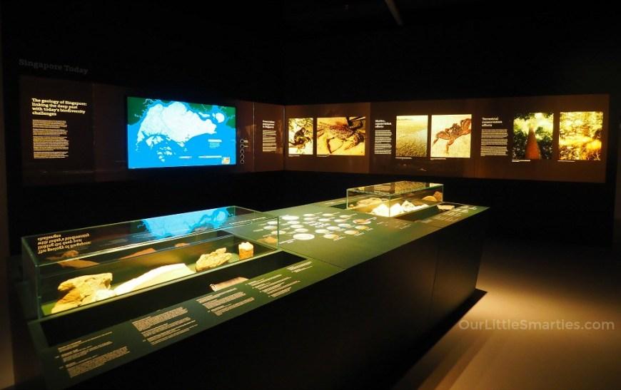 Lee Kong Chian Museum 5