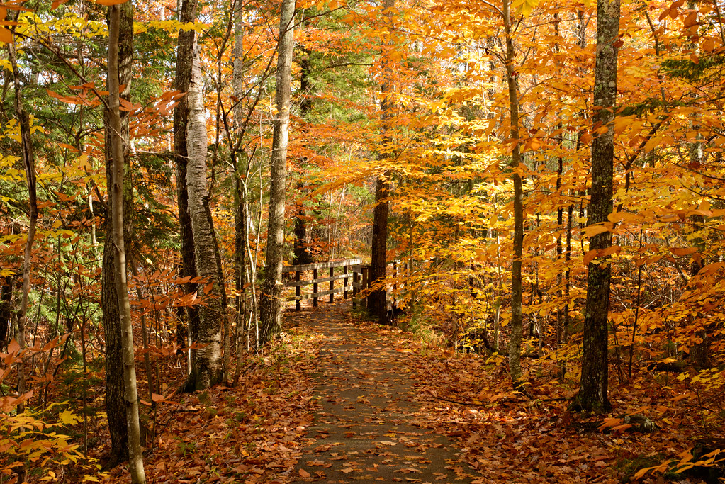 Wallpaper Desktop Fall Autumn Woods Just Great Color Had To Stop And Take A