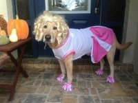 Cheerleader Dog Costume for Halloween | Terms of Use ...