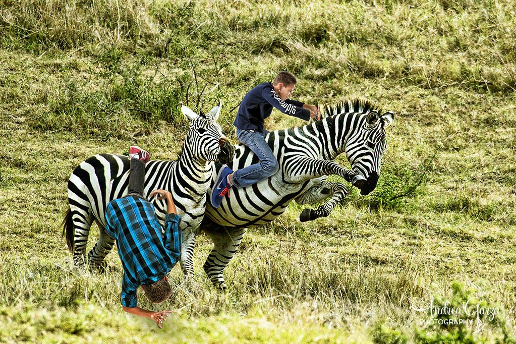 Wallpaper Falling Off Boys On Safari Zebra Riding So My Mom Went On A Photo