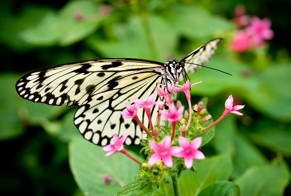 Reiman Gardens Butterfly David Moore Le Mars IA Taken
