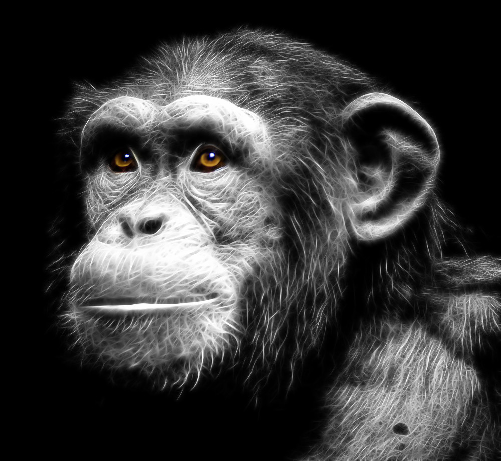 Cute Monkey Wallpapers For Mobile Fractal Chimpanzee Originally Photographed Inside The
