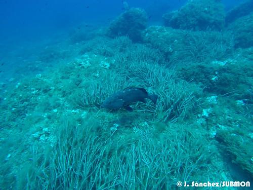 WildSea Divers IsladelToro
