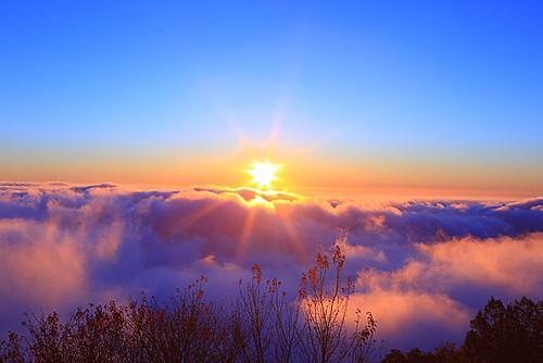 DW01524--嘉義縣--阿里山夕陽雲海--阿里山雲海   吳志學   Flickr