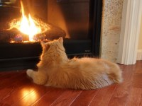 one fireplace, one cat | E-PM1.PC252341crop | Rick Payette ...