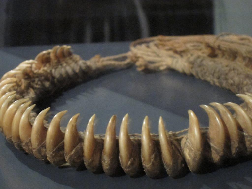Jaguar Claw Necklace Liz Henry Flickr