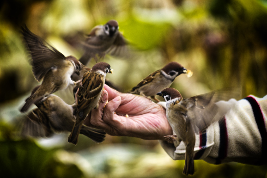 Desktop Wallpaper Wild And Free Quote Feeding Birds Alimentando Aves Diego Cambiaso Flickr