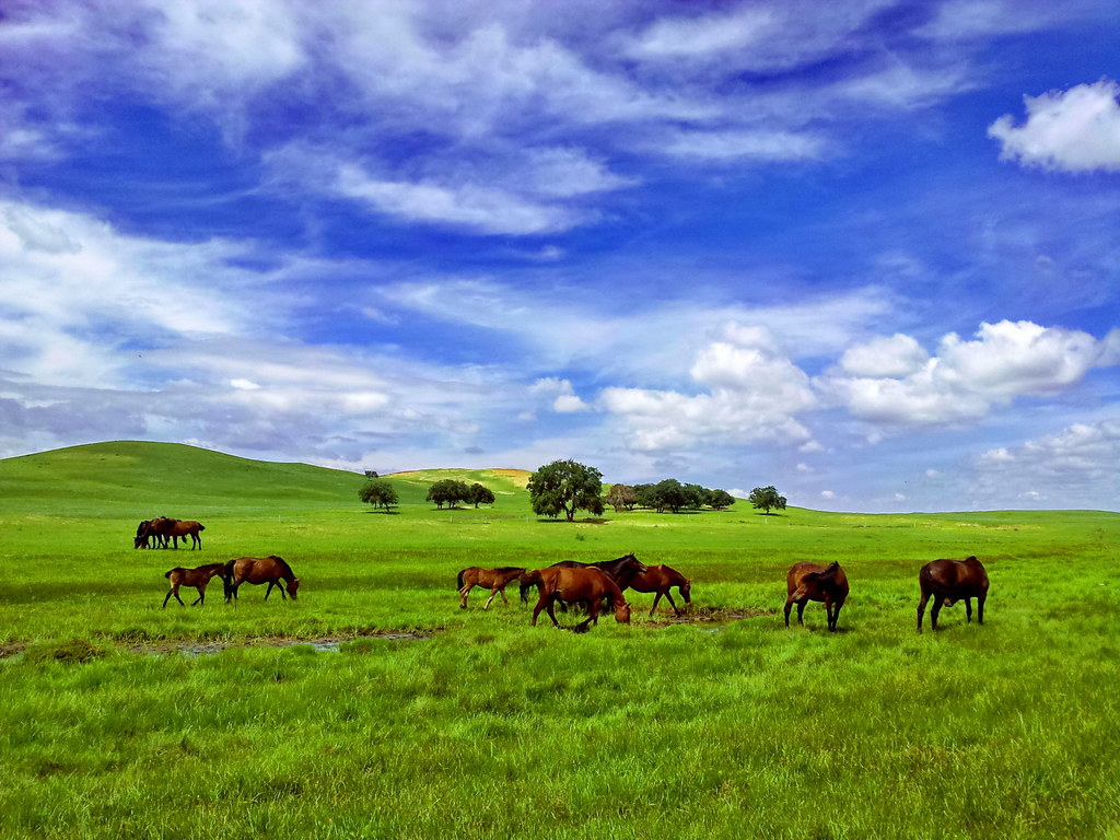 White Blue Wallpaper Hd Horse Life Inner Mongolia By Samsung Galaxy Note Flickr