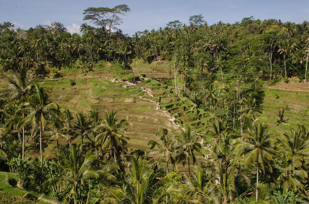 Tegallalang Rice Terrace, Ubud