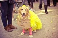 Halloween Dog Parade 2012 - Tompkins Square Park, East Vil ...