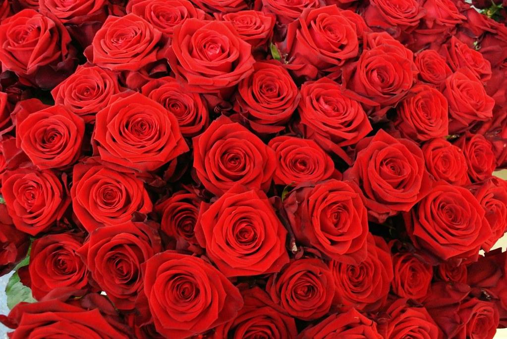 Roose roose   Palju nne snnipevaks armas Kaia Kall  Flickr