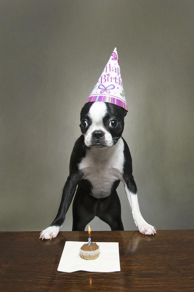 Happy Birthday Lula! Wishing Lu A Happy 1st Birthday