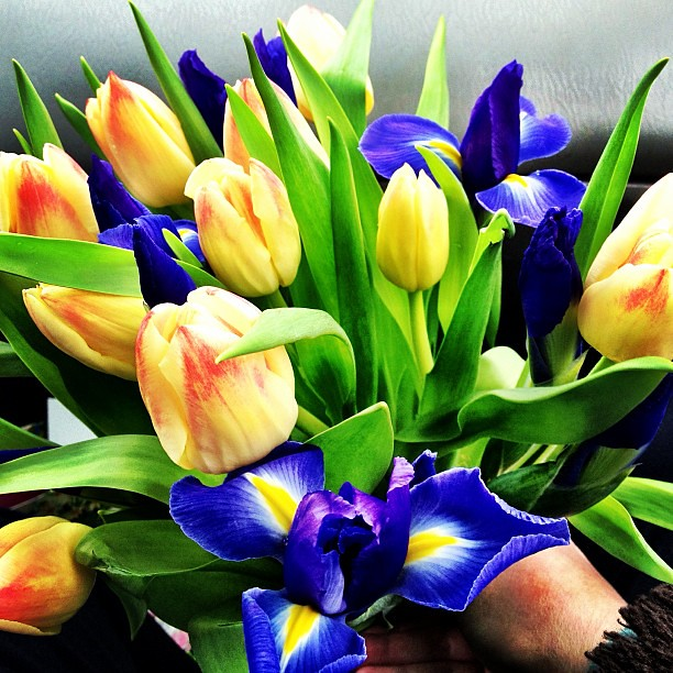 #spring #flowers For Aunt Sonia #iris #tulips #happybirth