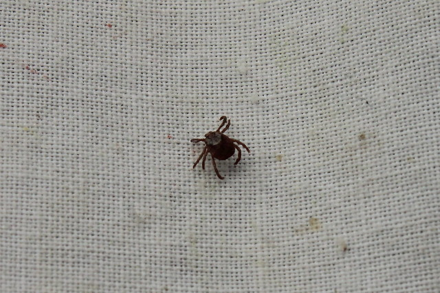 There were a few ticks still around in spite of the cooler